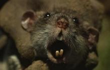 Дикое ЧП в Мариуполе: спящую 4-летнюю девочку в кровати едва не загрызла подвальная крыса - резонансные кадры