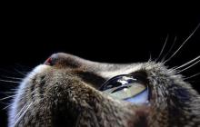 Видят ли коты призраков: ученые подробно рассказали о зрении котов