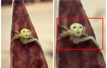В Крыму обнаружили инопланетных насекомых с ядовитым укусом