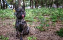 Видео, где освобожденный моряк Чулиба и его собака встретились после года разлуки, умилило Сеть