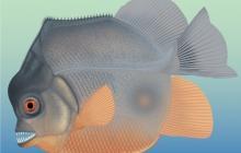 Жила в эпоху динозавров и разрывала все на куски: ученые показали самую древнюю рыбу-хищницу - фото