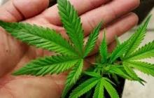 Супрун высказалась за легализацию марихуаны в Украине - СМИ
