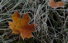Украину накроют дожди и заморозки: синоптики дали неутешительный прогноз
