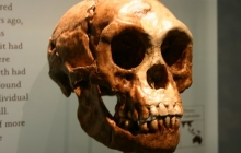 Ученые сделали грандиозное открытие: на острове Лусон найдены останки древних людей неизвестного вида