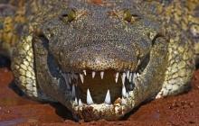 Гигантский крокодил на глазах у туристов агрессивно разделался с леопардом: очевидцы показали кадры нападения