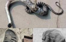 В Чернобыле 4-метровый человек-змея убил двух туристов