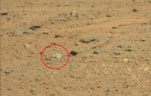 Череп воина Марса: на Красной планете ученые нашли невероятные останки - кадры