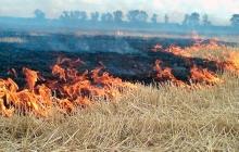 Крым охватила стена огня, которую никто не собирается тушить: появились фото выжженного полуострова
