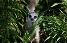 Денег куры не клюют? В Новой Зеландии правительство выделило 26 миллионов долларов на истребление диких животных