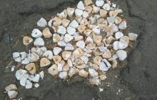 На Луганщине залатали ямы на дорогах слепками челюстей, жители вне себя от гнева – кадры