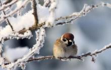 Битва тепла и мороза, мокрый снег и гололед: какую погоду в Украину принесет антициклон в ноябре - прогноз