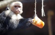 В Черкассах животных от жары спасают уникальным лакомством - в Сети появилось трогательное видео