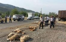 """""""Влетел"""" на большой скорости: в Азербайджане бедовый водитель сбил отару овец и пастуха"""