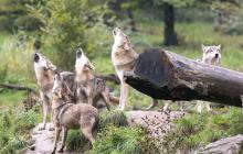 В Докучаевске и Еленовке стая волков держит в страхе гражданское население, боевики бездействуют