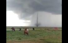 """Смерч в Крыму и """"невозмутимые"""" коровы на фоне бури: соцсети впечатлило видео мощного явления природы"""
