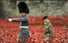 В честь жертв Первой мировой войны в Лондоне зацвело маковое поле