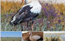 Под Одессой в природном парке стихия погубила не менее 300 птиц, среди которых аисты