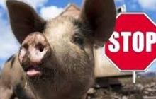 ЧП в Черновцах: на Буковине нашли стихийный могильник с тысячами свиных туш - кадры