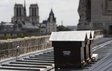 Весь мир потрясен невероятным чудом: в страшном пожаре в Нотр-Дам де Пари выжили пчелы, жившие на крыше легендарного собора - кадры