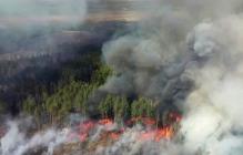 В Чернобыльской зоне полыхает пожар: появились новые данные из эпицентра природной катастрофы
