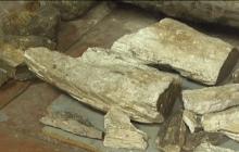 В Запорожской области археологи нашли останки мамонта - кадры