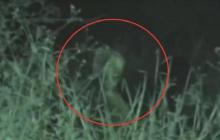 Гуманоиды с Нибиру уже на Земле: детеныш Звезды смерти снова попал в объектив камеры – видео