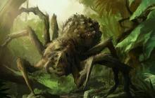 Двухметровые монстры, которые могут уничтожить человека: раскрыт феномен гигантских пауков Джейба Фофи