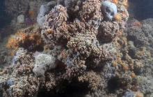 В Италии обнаружили уникальный в своем роде коралловый риф: ученые поражены находкой