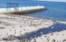 Пляж в центре Феодосии страдает от нечистот: канализация стекает прямо в море
