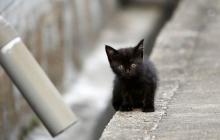 Львовянин закрыл кота в банке и распространил видео в Сети: после резонанса кадры были спешно удалены