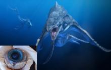 После сражения с инопланетным монстром на побережье Флориды выбросило глаз кита