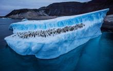 Канадские ученые смогли возродить 1500-летние растения, которые были подо льдами Антарктиды
