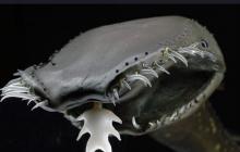 """""""Шпионы"""" звезды смерти Нибиру на дне океана: в Сети показали впечатляющие фото невероятных существ"""