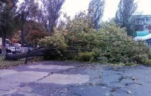 На Киев обрушилась стихия: мощный ураган валил деревья и столбы, кадры