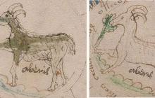 """Расшифрован самый загадочный манускрипт средневековой Европы, называемый """"посланием инопланетян"""", – кадры"""