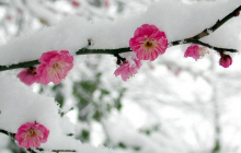 Украину накроют дожди и заморозки: где похолодает – прогноз от Диденко