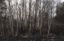 """Казанский показал руины от села на Житомирщине после разрушительных пожаров: """"Это для тех, кто еще не понял"""""""