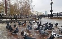 """Голубей больше, чем людей: Сеть поражена кадрами из """"добитого"""" Донецка – мрак и пустота"""