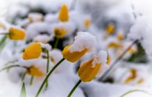 Погода в Украине кардинально изменится: синоптики предупредили о реванше зимы