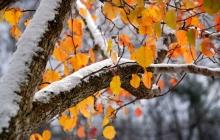 Синоптики предупредили о первых морозах в Украине: пойдет снег и резко похолодает