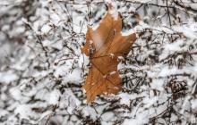 Погода в начале декабря в Украине: что-то новое каждый день