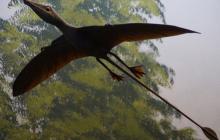 Американка увидела полет гигантского доисторического птерозавра