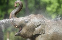 В одном из зоопарков слон показал, как правильно расслабляться в жару