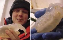 На 3,5-километровой глубине арктического водоема нашли неизвестное науке существо
