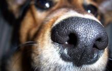 Нищие в России начали есть собак, чтобы выжить