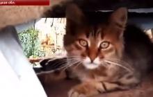 Погибшей кошке Соне, спасшей бойца ВСУ от российского снайпера, установили памятник на Донбассе, - видео