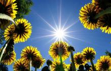 Погода в Украине на 8 и 9 мая: синоптик назвал дату, когда приблизится лето