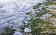 С Азовским морем произошла беда: тысячи мертвых существ найдены на побережье