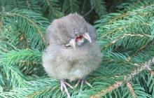 В ботанический сад Подмосковья прилетел мутант-птицерыл из Чернобыля