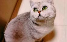 В Ухани кошка Лэ-Лэ прожила взаперти больше 40 дней и приготовила вернувшимся хозяевам сюрприз, кадры
